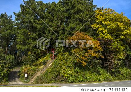 Shinshu, Iiyama City, Nagano Prefecture, Autumn leaves of Katayamainari Shrine 71411433