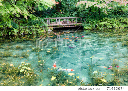 無名池塘莫奈的池塘全景 71412074