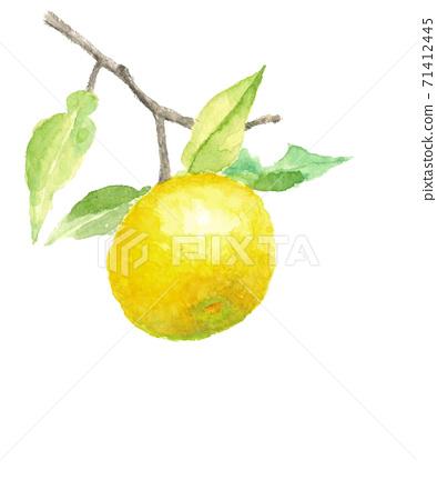 柚子與葉子變成一棵樹白色背景與副本空間[水彩] 71412445