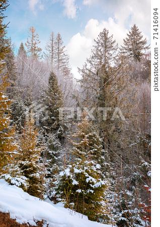 forest on a misty morning. trees in hoarfrost. beautiful winter scenery in foggy weather 71416094