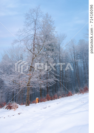 forest on a snow covered slope. trees in hoarfrost. mysterious foggy weather in the morning. beautiful winter scenery 71416096
