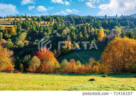 autumnal rural landscape in mountains. grass on the hill, trees in colorful foliage. beautiful nature scenery. sunny morning weather with fluffy clouds on the sky 71416107