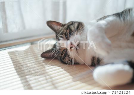 창가의 고양이 71421224
