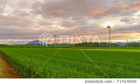 Evening view of tea plantations in Kirishima and Sakurajima 71424690