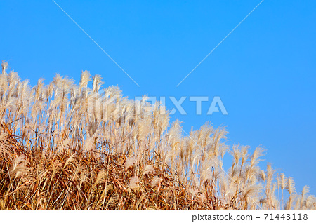 상암 하늘공원과 억새밭 풍경,  71443118