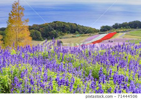 아와 꽃 관람석 가을의 꽃 71444506