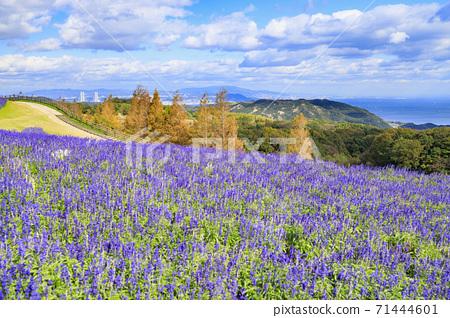 아와 꽃 관람석 가을의 꽃 71444601