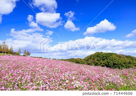 아와 꽃 관람석 가을의 꽃 71444606