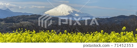 Nanohana和富士山/ Azumayama公園(神奈川縣二宮町)的水平照片 71452353