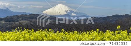 Horizontal photo of Nanohana and Mt. Fuji / Azumayama Park (Ninomiya Town, Kanagawa Prefecture) 71452353