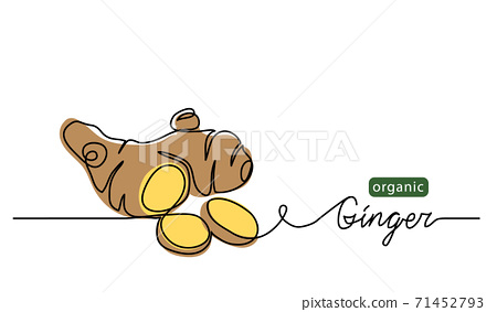 Ginger vector illustration. One line drawing art illustration with lettering organic ginger 71452793