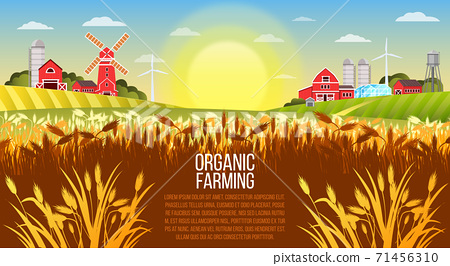 Organic farm vector landscape with wheat field, village buildings, green hills, mill, barn.  71456310
