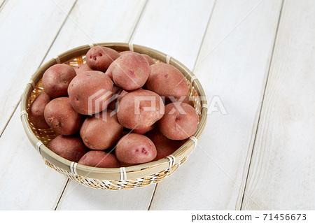 紅土豆,土豆, 71456673