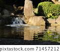 小さい滝と黄色い花ツワブキ 71457212