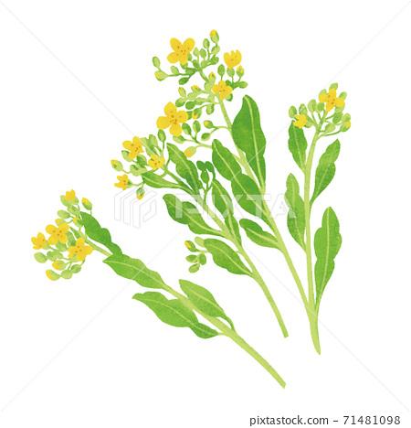 葉花的手繪插圖/春天成分 71481098