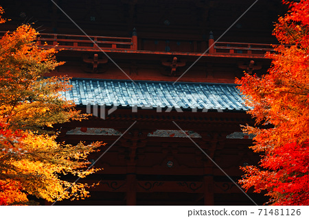 [Mt. Koya] Daimon where the autumn leaves are in full bloom 71481126