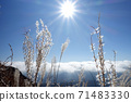秋月,Yusudake山路上的Susuki,Unkai和Sun 71483330
