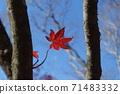 在秋天攀登由布岳時發現的秋葉 71483332