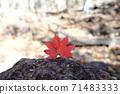 在秋天攀登由布岳時發現的秋葉 71483333