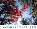 Yufudake登山的秋葉 71483334