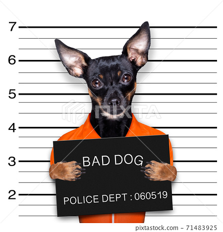 prague ratter dog police mugshot 71483925