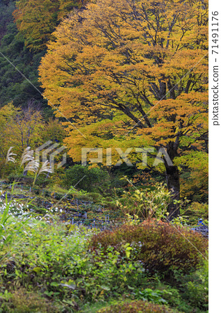 유자와 고원 파노라마 파크 알프스 마을 71491176