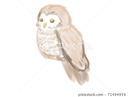Owl watercolor touch 71494959