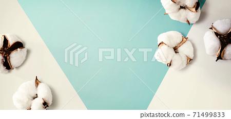 White cotton flowers 71499833