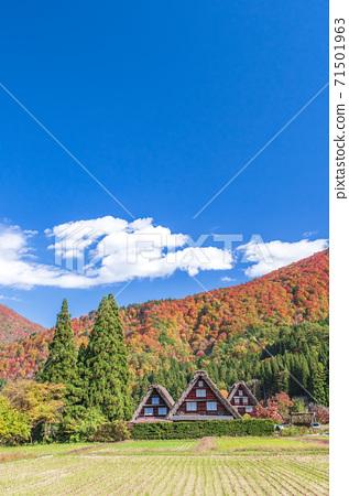 [세계 유산] 기후현 시라카와 고의 갓 쇼즈 쿠리 마을 (가을 이미지) 71501963