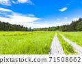 夏季邀您到大沼沼的木路 71508662