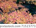다채로운 단풍 카펫 71523773
