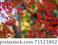 홍색과 녹색의 대비가 빛나는 단풍 나무와 바부루보케 71523802
