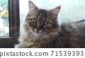 一隻貓 71539393