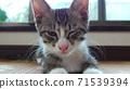 一隻貓 71539394