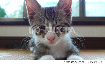 Cat 71539394