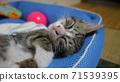 一隻貓 71539395