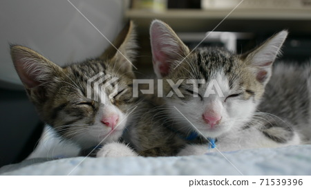 Cat 71539396