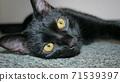 一隻貓 71539397