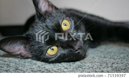 Cat 71539397