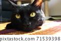 一隻貓 71539398