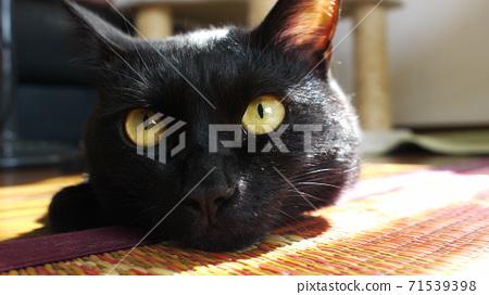 고양이 71539398