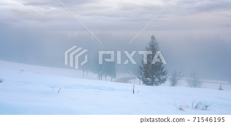 forest on a snow covered slope. trees in hoarfrost. mysterious foggy weather in the morning. beautiful winter scenery 71546195
