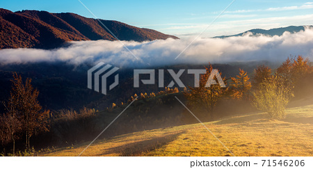 stunning rural landscape. foggy scenery at sunrise in autumn season. trees on mountain hills in colorful foliage. panoramic view 71546206