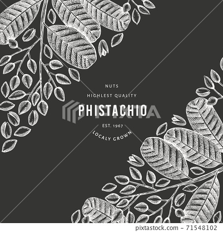 Hand drawn phistachio branch and kernels design template. Organic food vector illustration on chalk board. Retro nut illustration. Engraved style botanical banner. 71548102