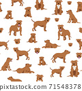 Staffordshire bull terrier seamless pattern. Staffy characters set 71548378