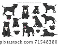 Staffordshire bull terrier in different poses. Staffy characters set 71548380