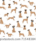 Great dane seamless pattern. Different variaties of coat color dog set 71548384