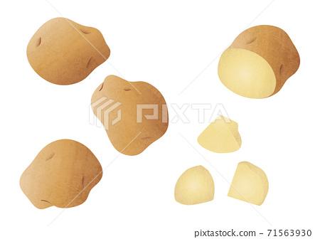 감자 여러가지 소재 일러스트 71563930