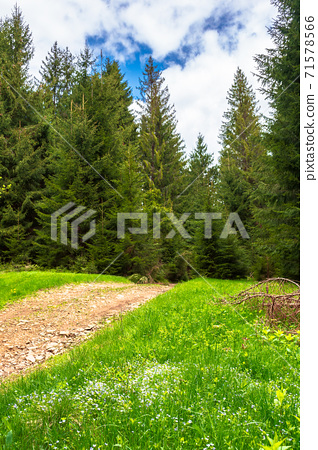 beautiful nature mountain scenery. path through forest on grassy hills in springtime. concept of outdoor adventure on a sunny day with clouds on the blue sky 71578566