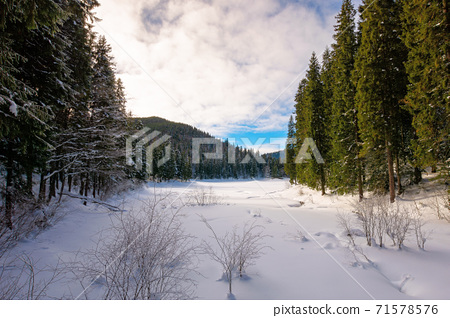 snow covered mountain lake among the forest. green spruce trees on the shore. beautiful sunny weather. clouds on the sky 71578576